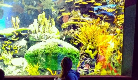 A Sleepover at the Toronto Aquarium