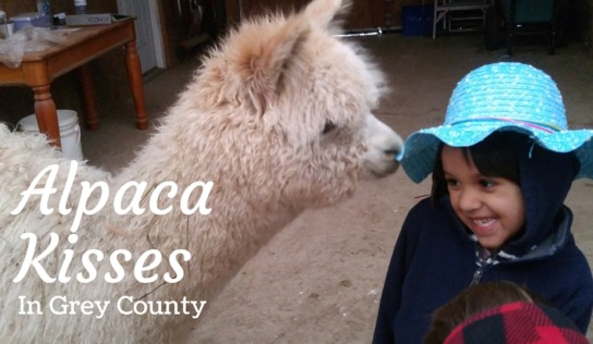 Hanging with Alpacas and Adventures at Scenic Caves