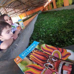 Exploring Sri Lanka's Tea Culture at Handunugoda Tea Estate #MurphysDoSriLanka