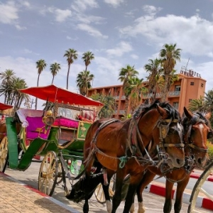 A Weekend in Marrakech With Kids