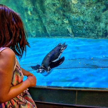 dubai with kids. Dubai aquarium with kids