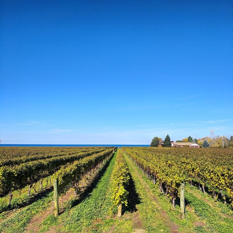 best winery niagara falls canada
