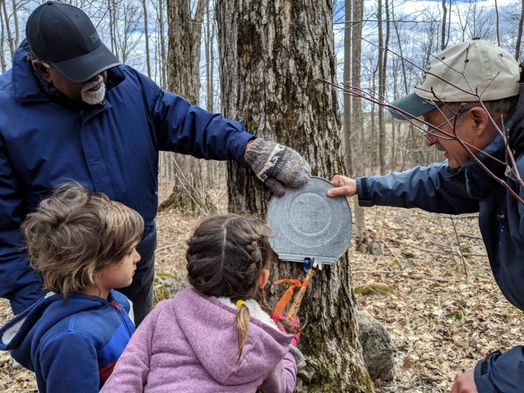 visiting a sugar bush in ontario, maple tour Ontario, maple tour grey county, where to learn about maple in Toronto, toronto road trips