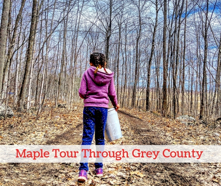 maple road trip Canada, things to do in Canada, visiting a sugar bush in ontario, maple tour Ontario, maple tour grey county, where to learn about maple in Toronto, toronto road trips