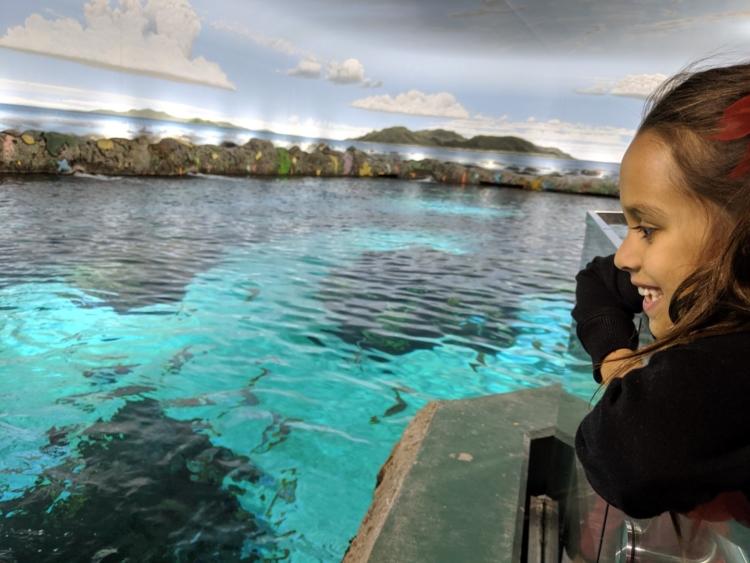 Aquarium Canada Toronto Shark