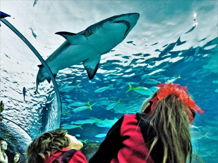 Shark at Aquarium of Canada