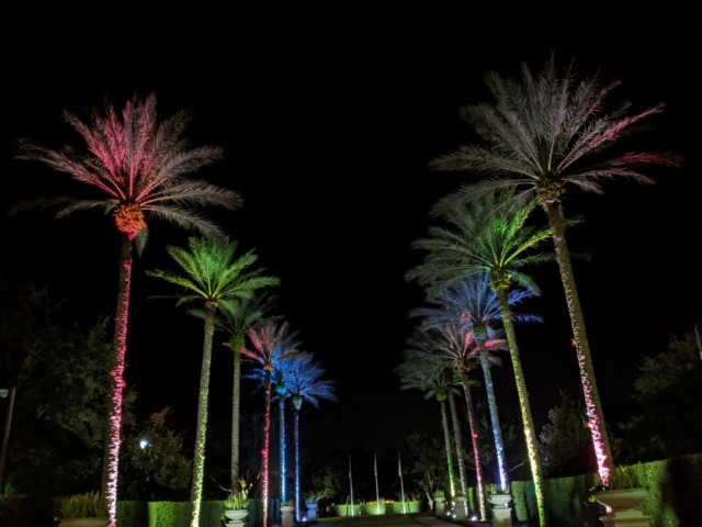 Palm trees in Kissimmee
