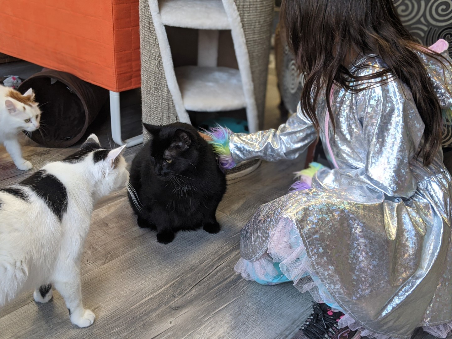 girl petting cats at Alley cat cafe in Stratford