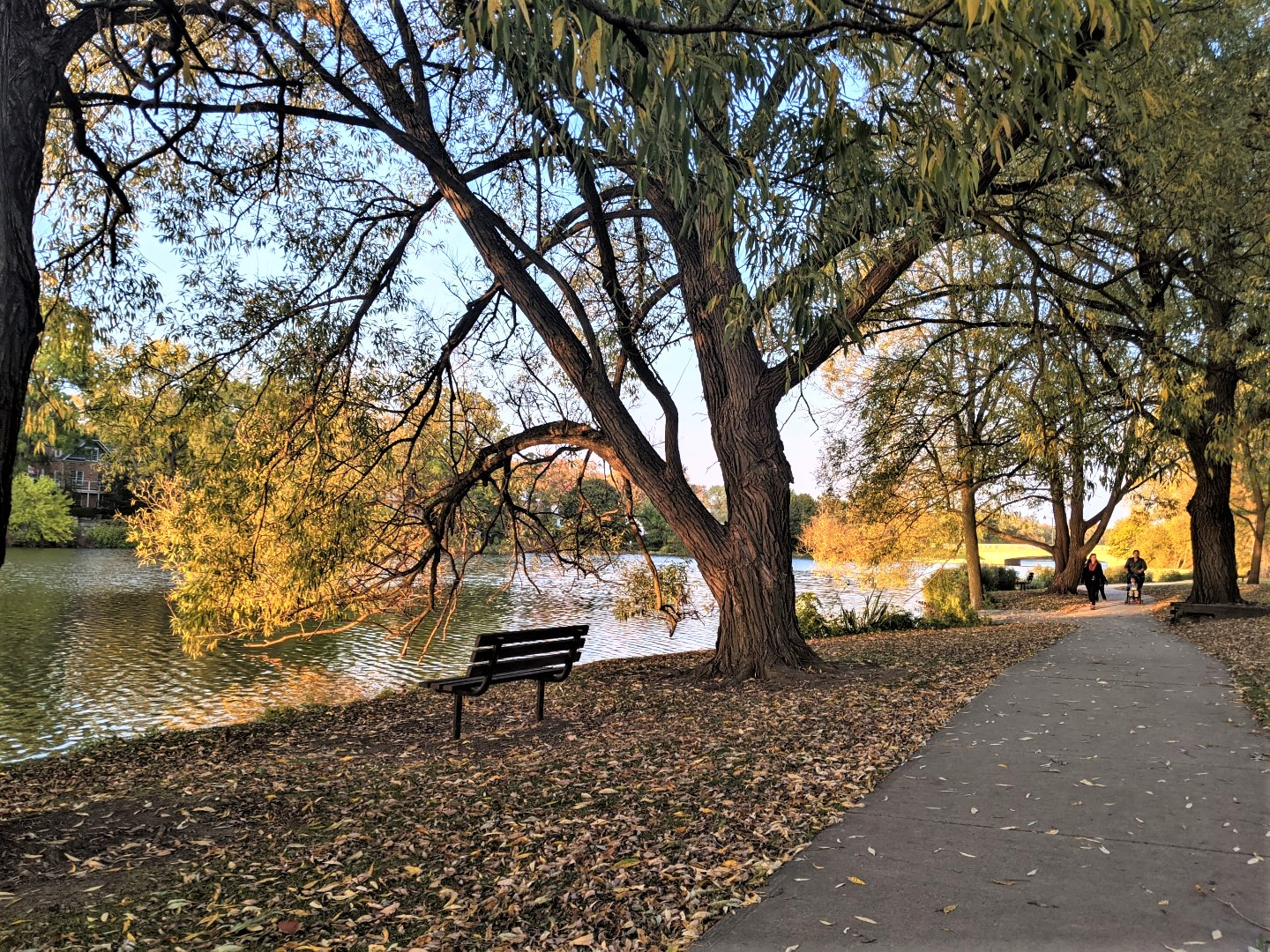 park bench with fall colours by lake in Stratford
