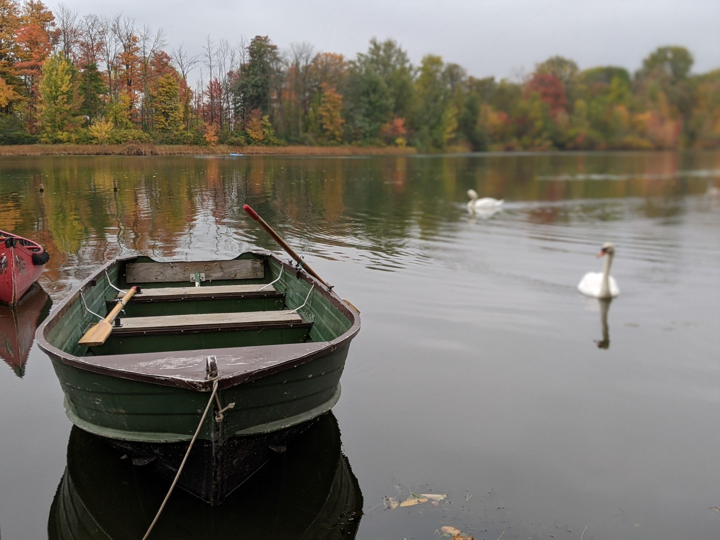 row boat on avon river with Stratford Swan