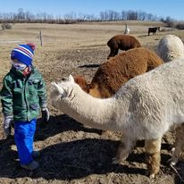 Boy in winter clothing with farm animals