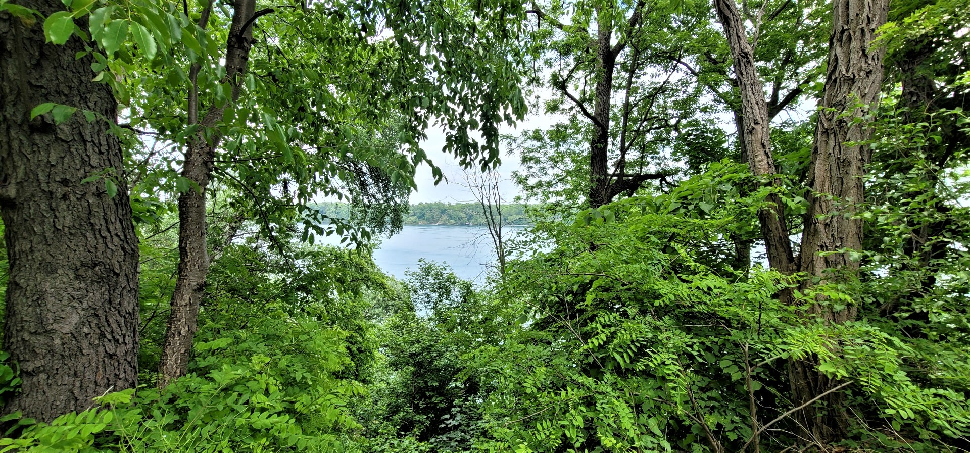 trees with a Niagara river view