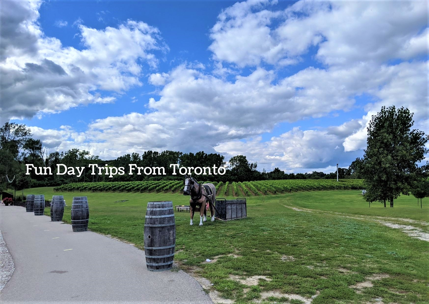 Horse and buggy on green grass in Ontario for day trip from Toronto