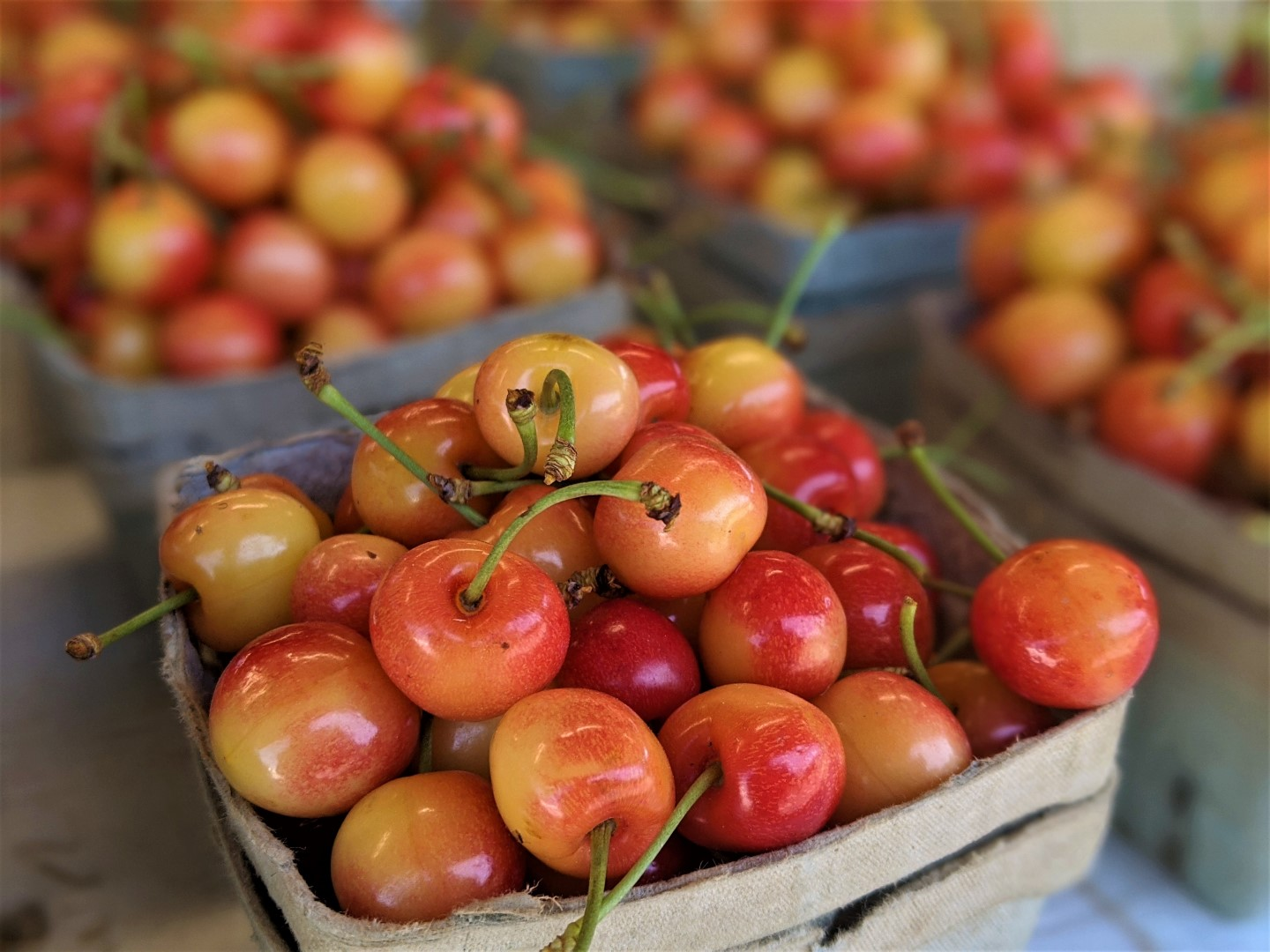 cherries from the farm in Niagara on the Lake
