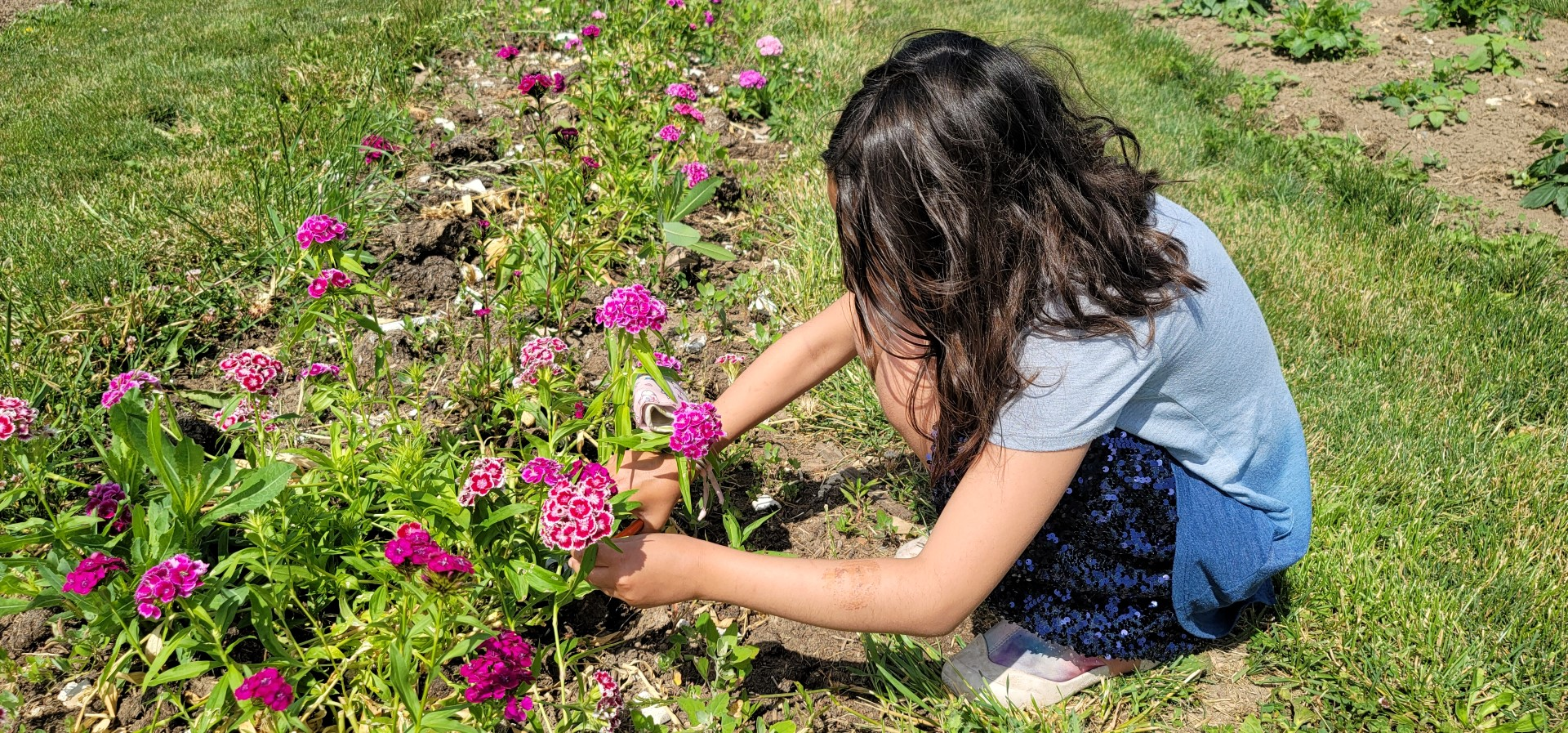 girl cutting flowers