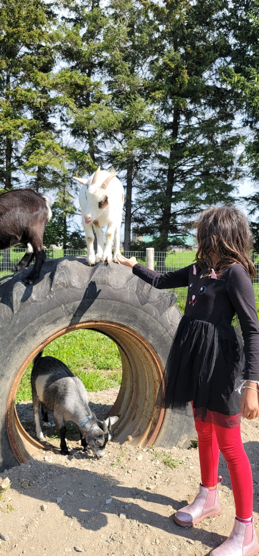 child extending hand to goat