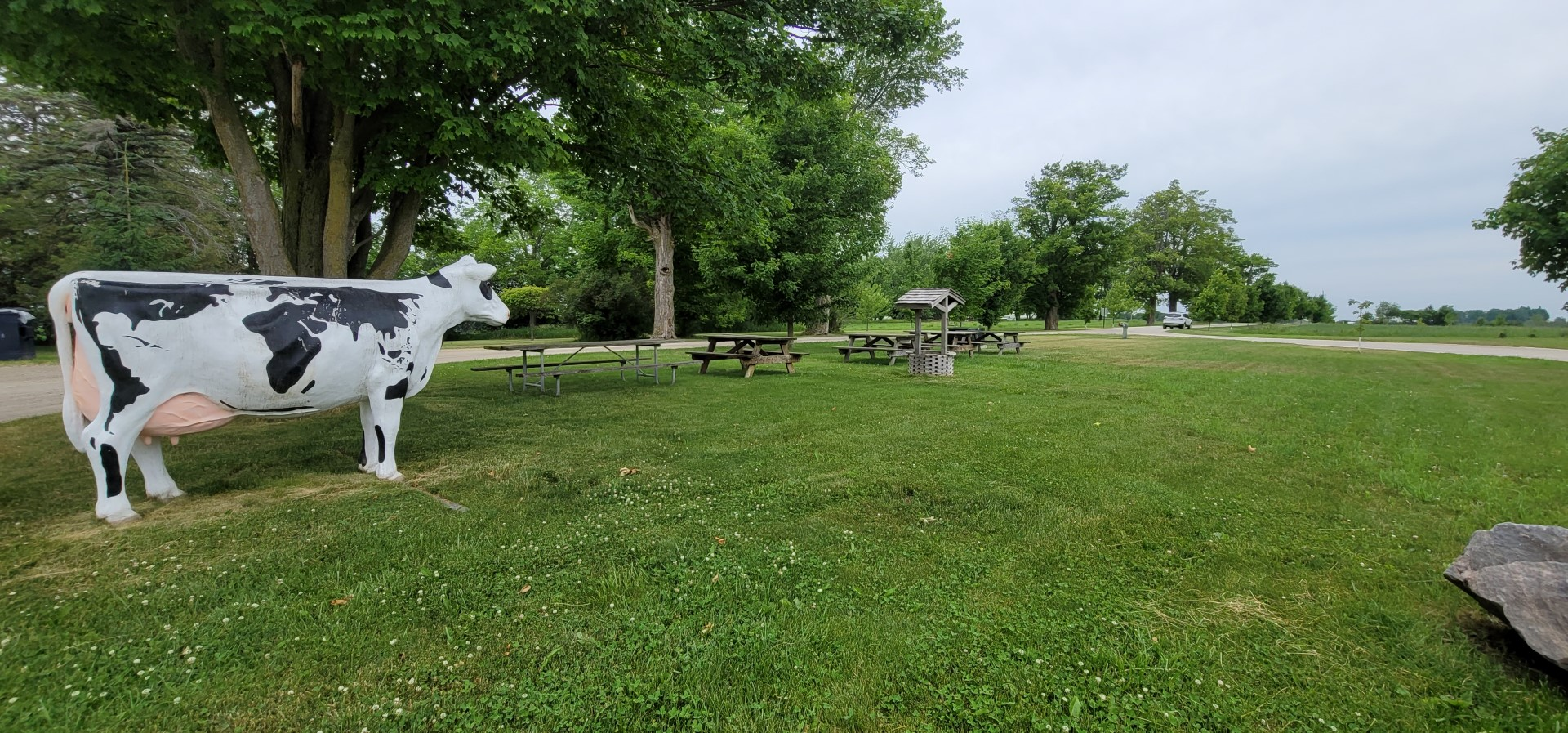 Cow statue in green grass with picnic benches