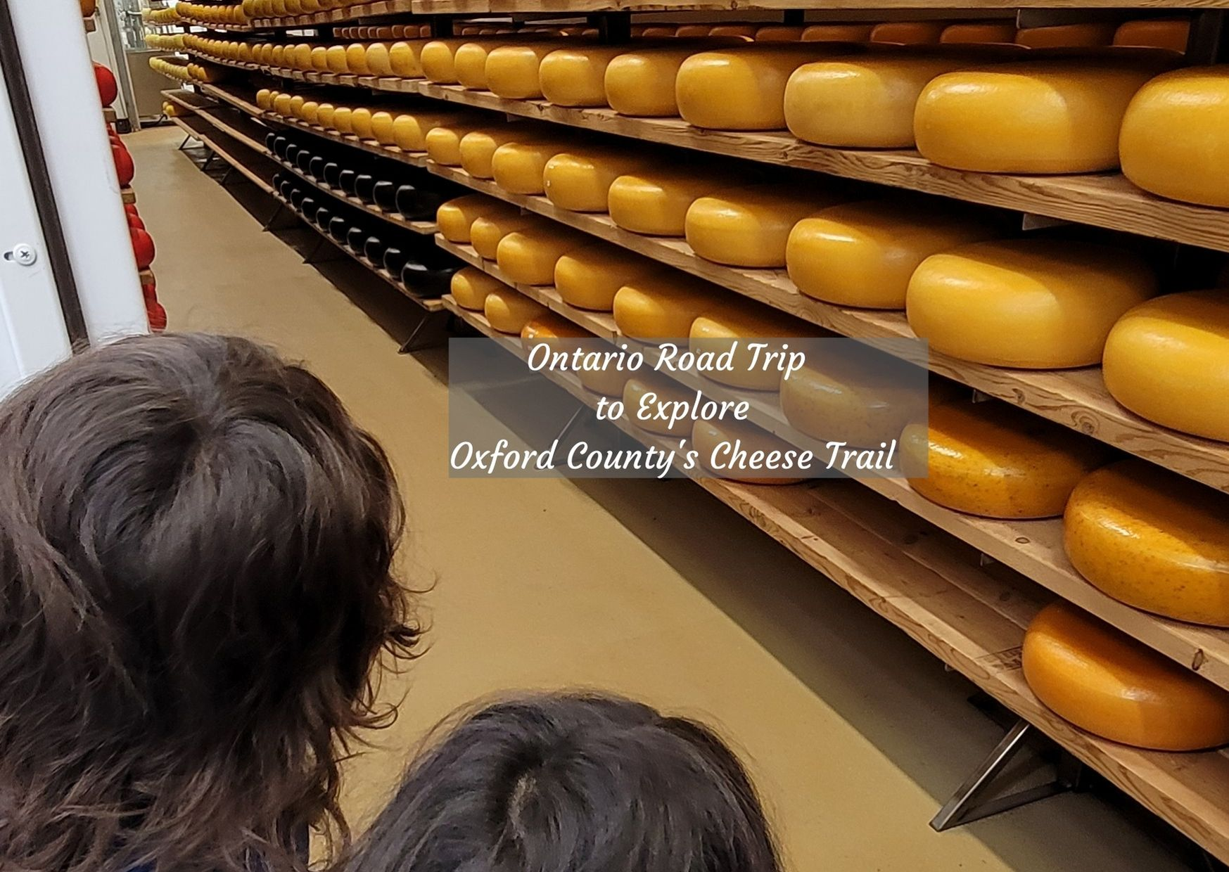 children looking at cheese room filled with cheese wheels in Oxford county