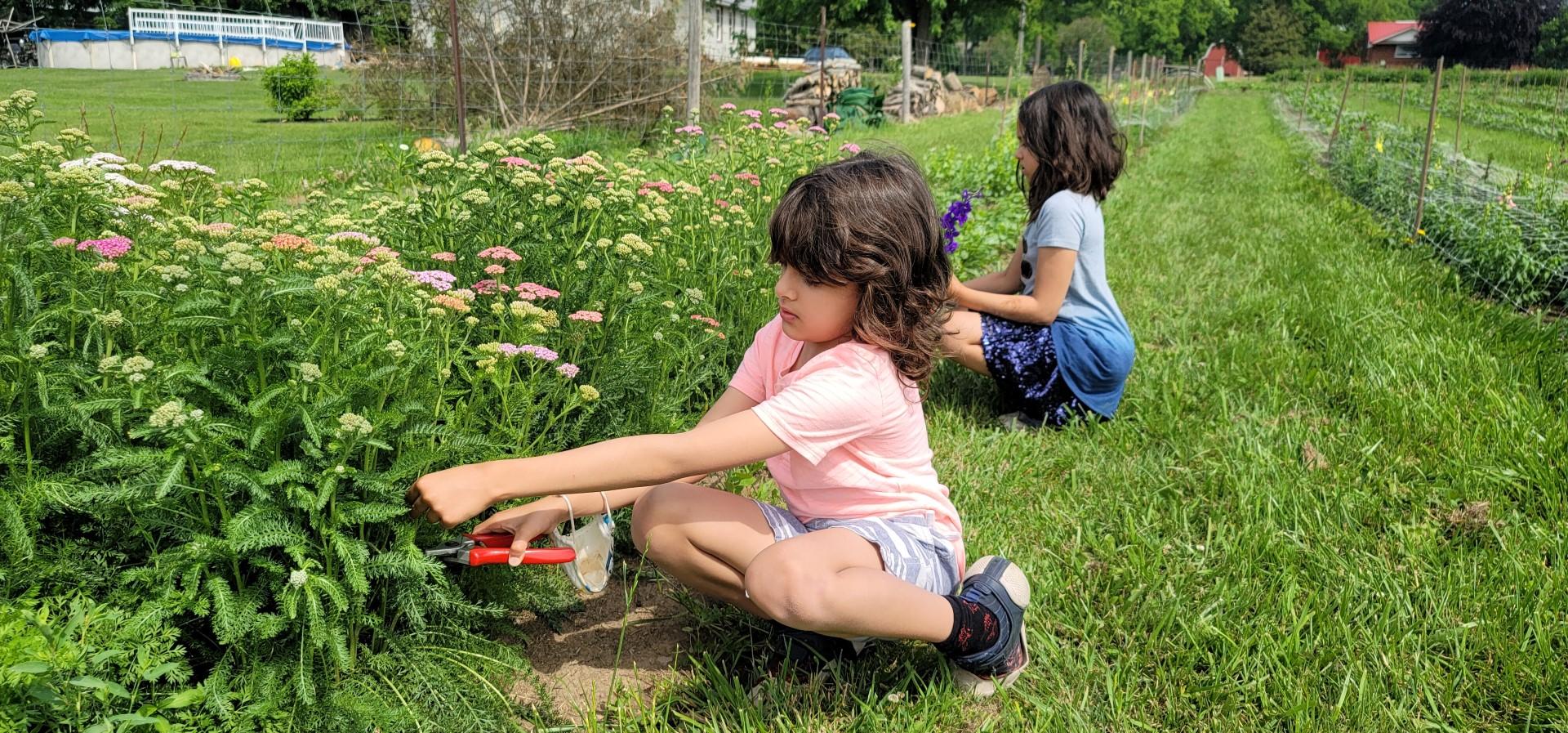 boy cutting flowers at u pick farm Ontario