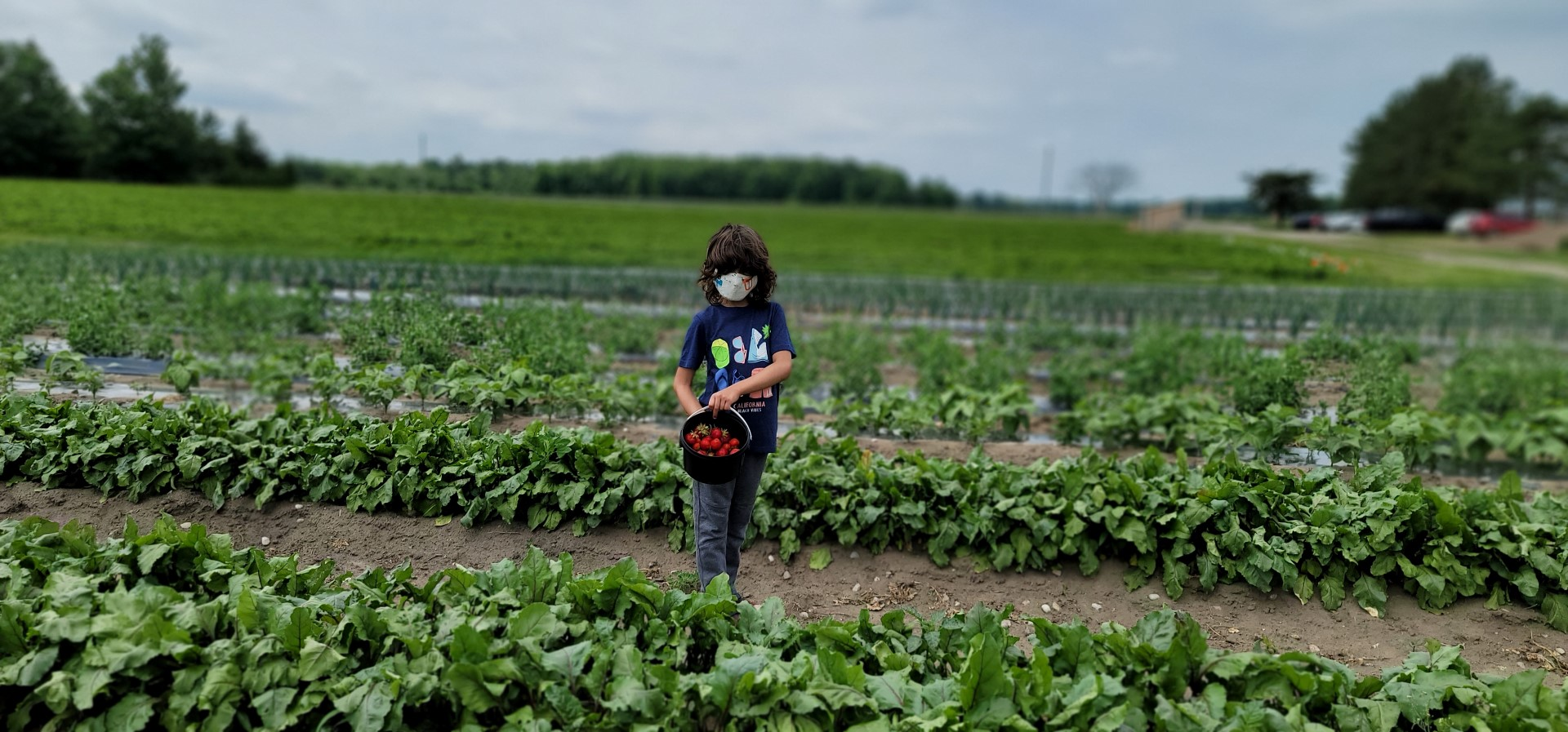 masked boy in pick your own strawberry field