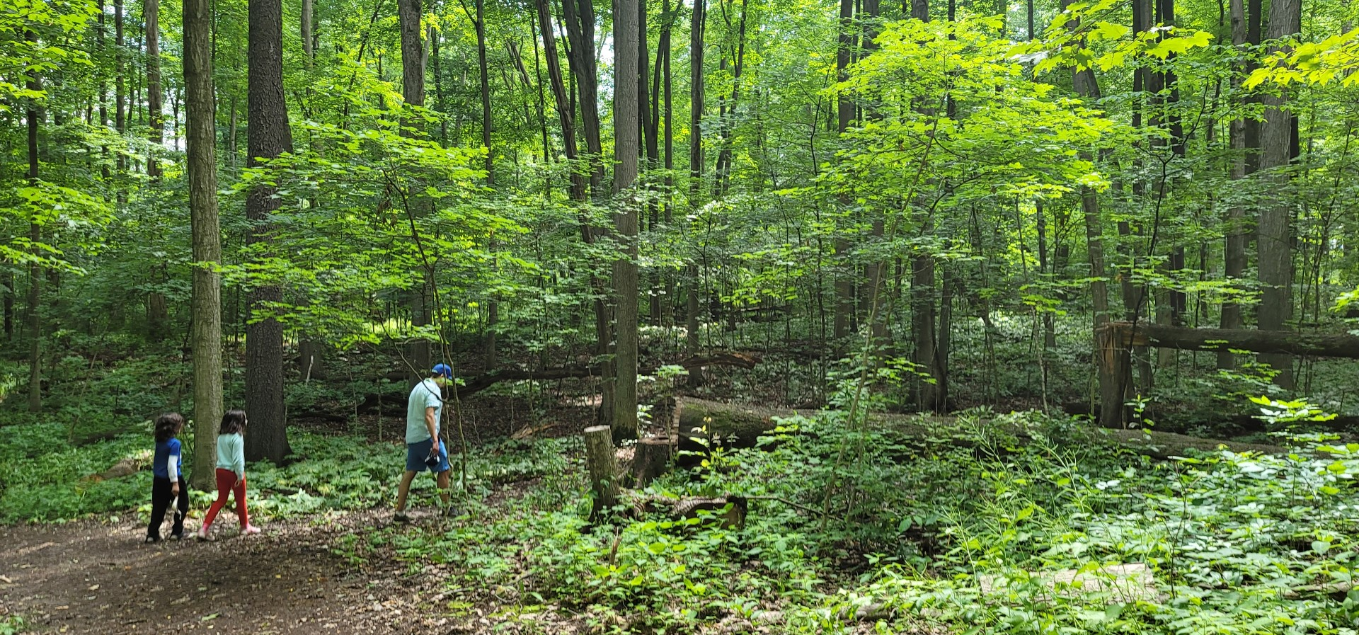 trees at trillium woods trail