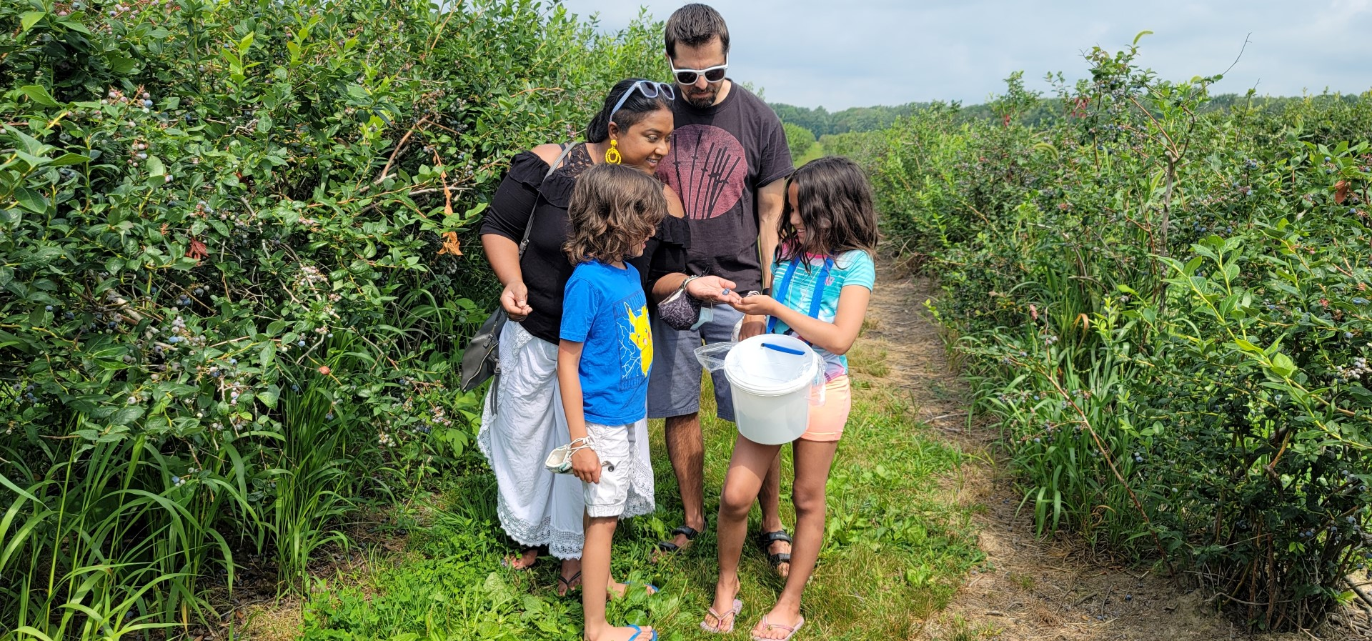 family looking at blueberries collected in Norfolk County