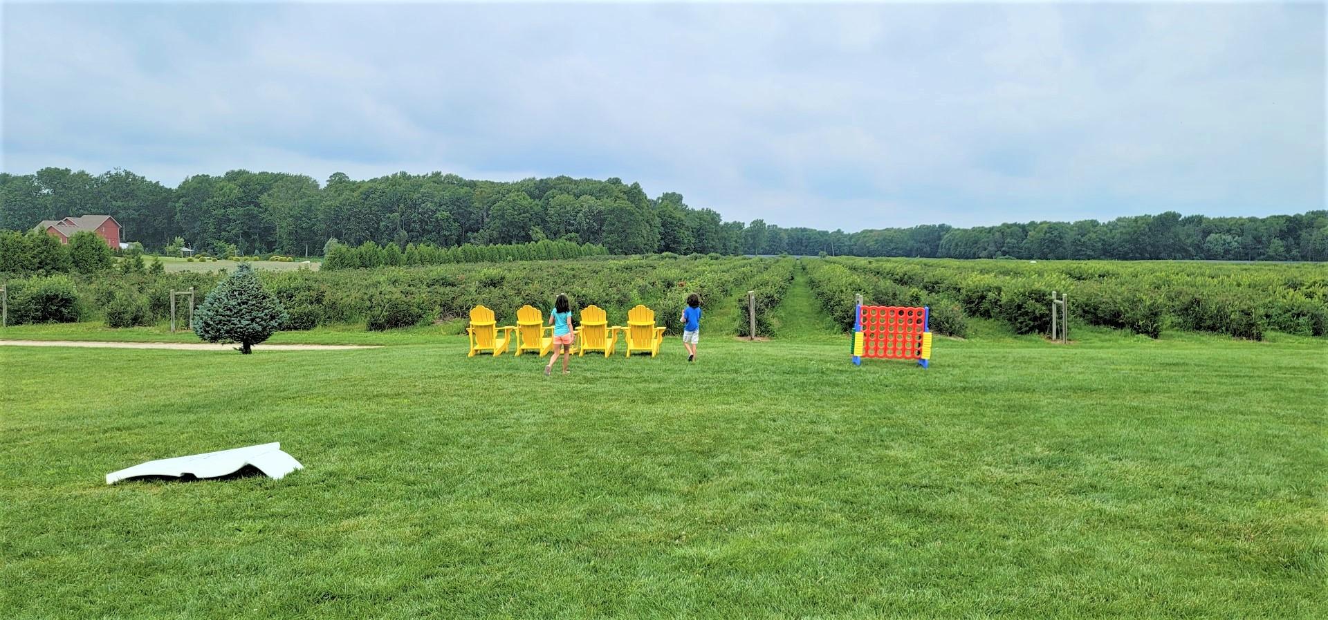 kids running toward yellow chairs at Ontario blueberry farm