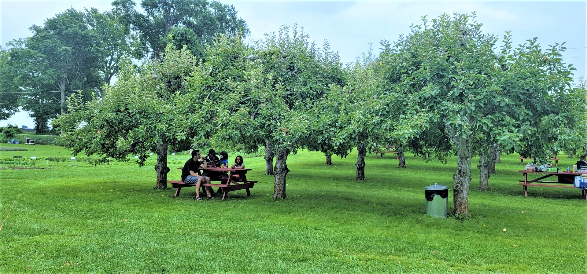 family under apple trees in Ontario orchard