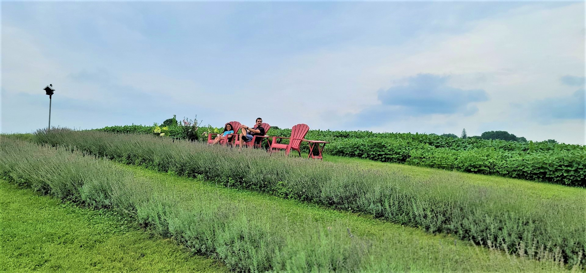family in red chairs in middle of apple hill lavender farm
