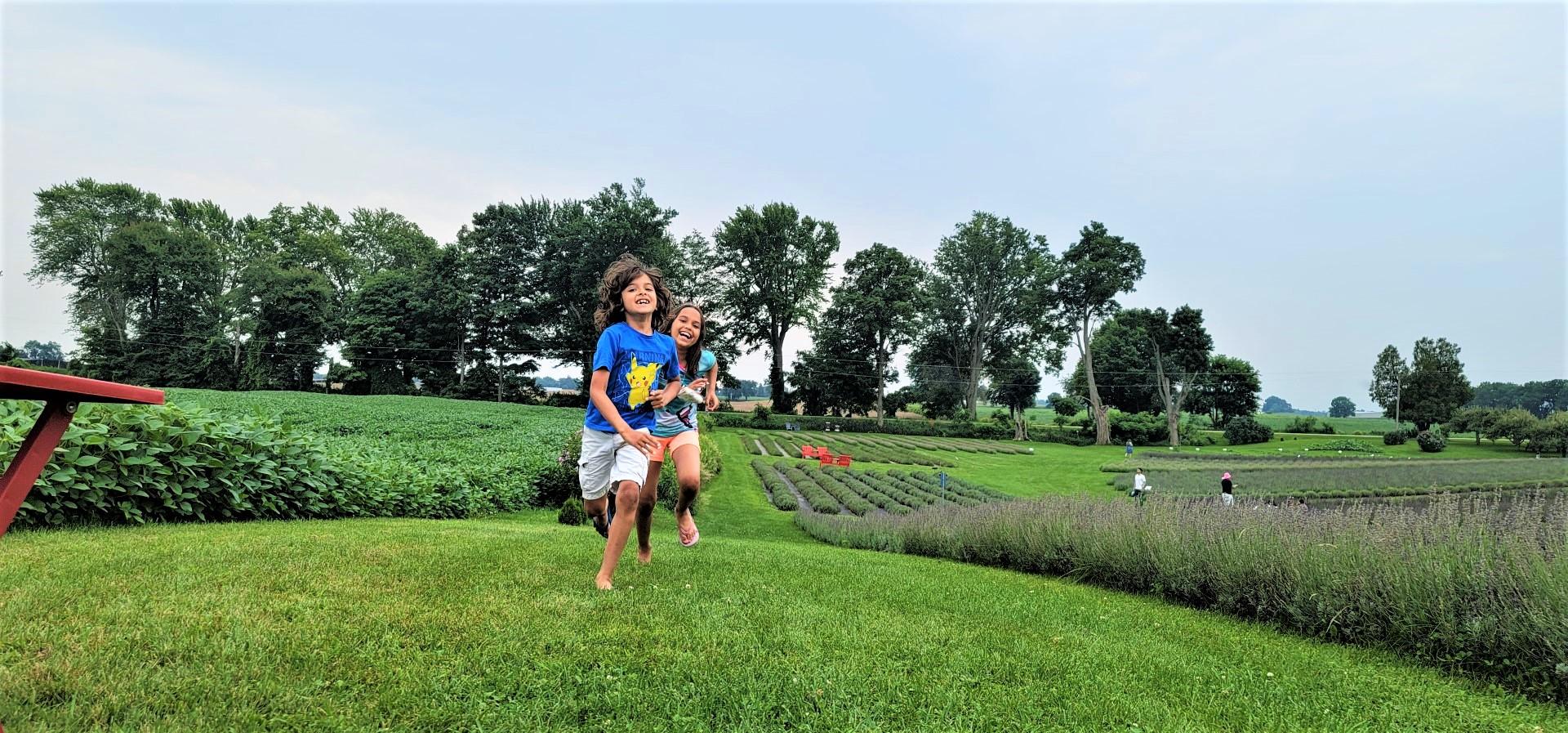 kids running through lavender farm in Ontario