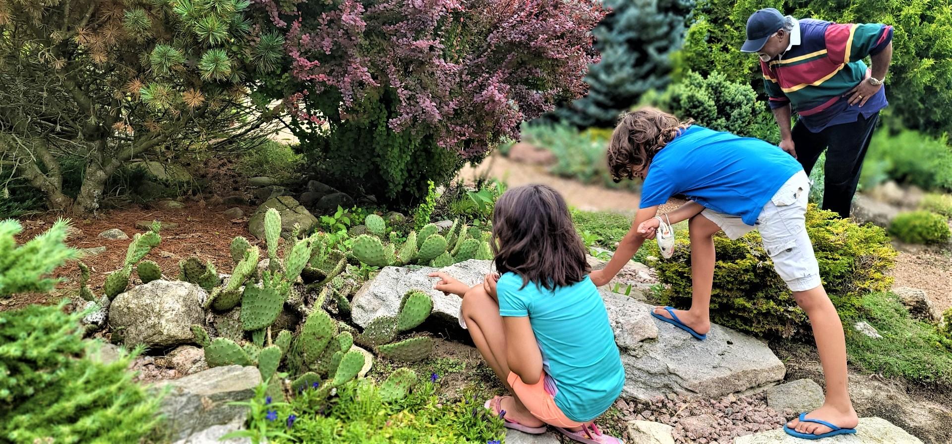 kids looking at cacti