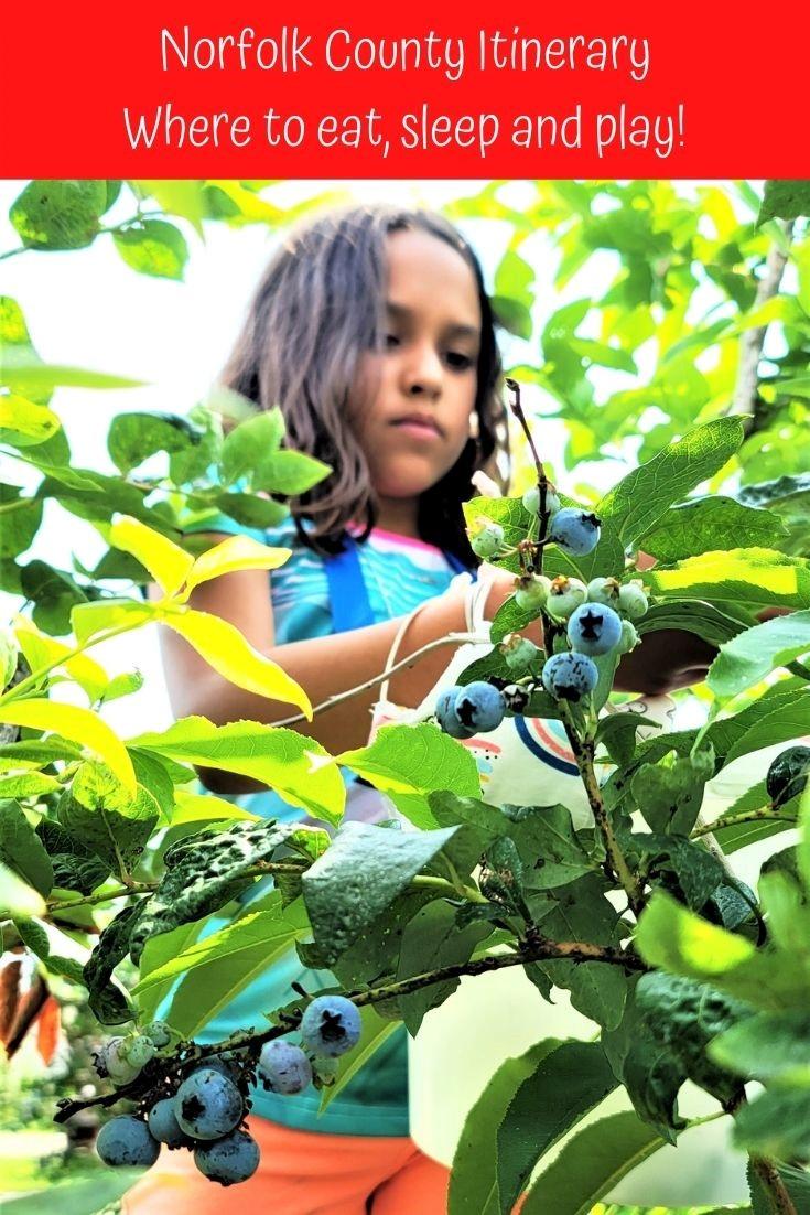 girl picking blueberries at Norfolk Ontario farm