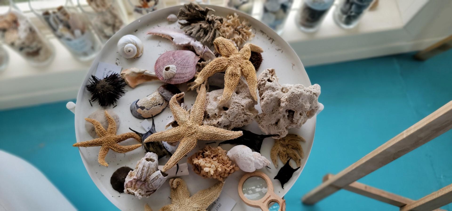 Shopping on Magdalen islands for shells on a platter