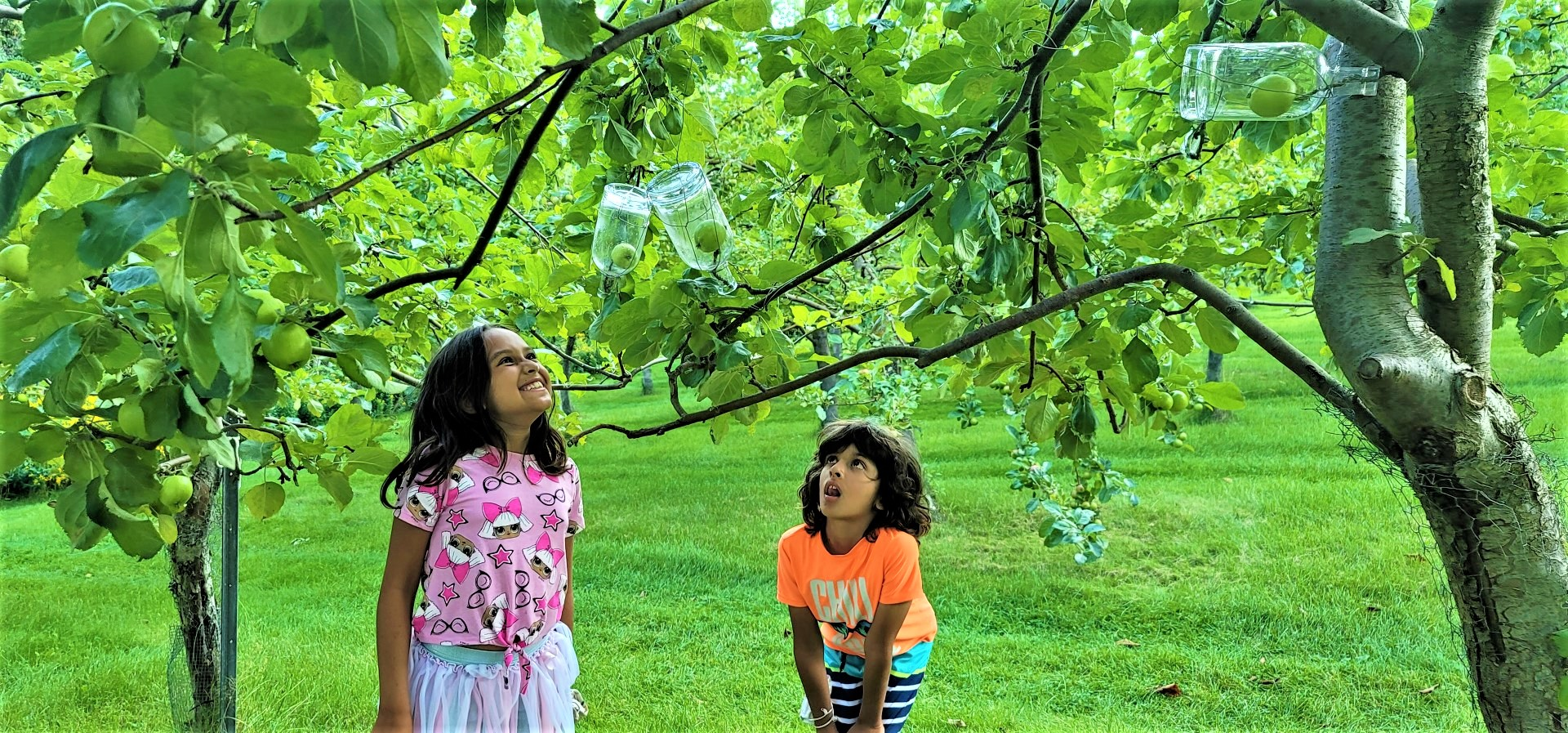 kids looking at green trees with apples growing in Le Verger Poméloi bottles