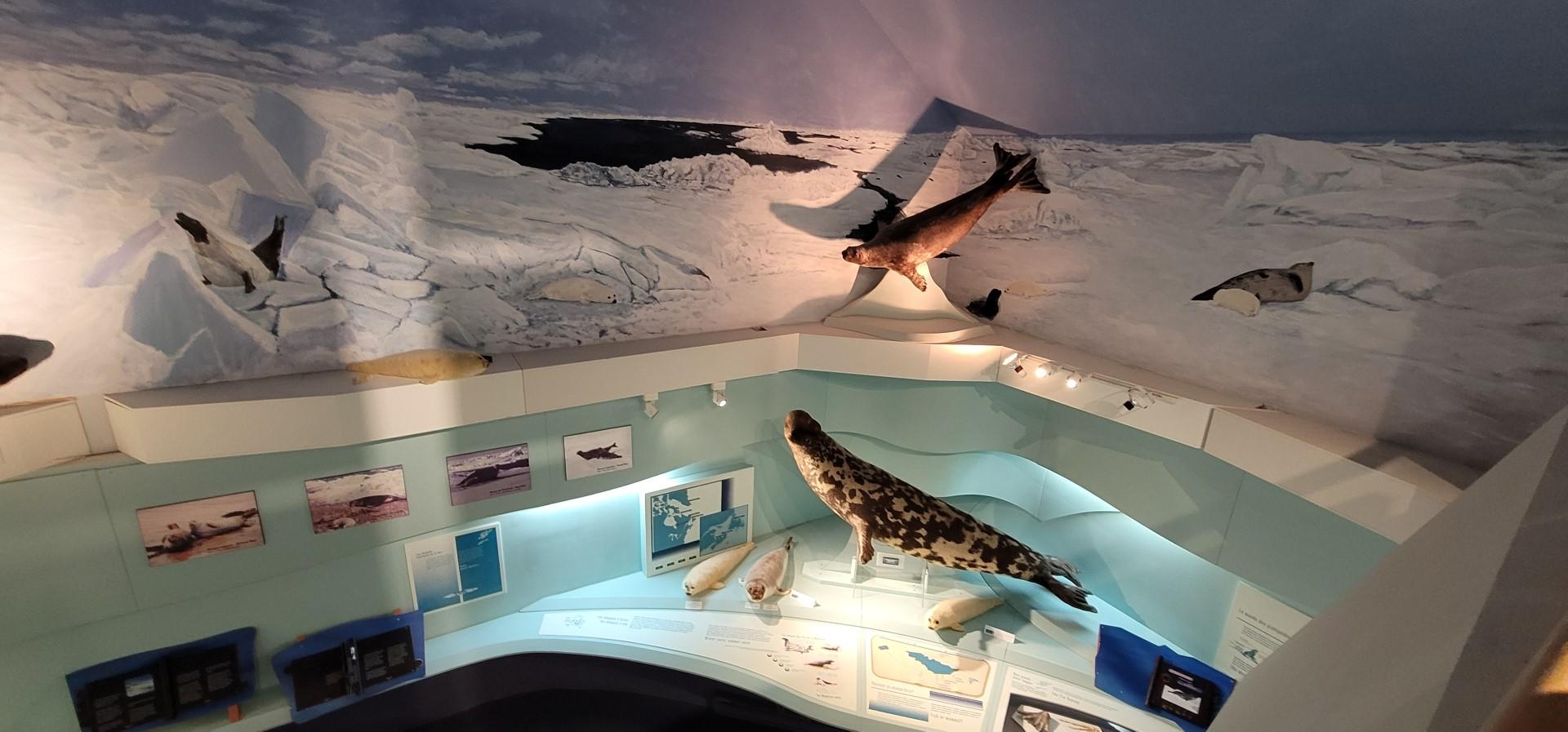 SEAL display at seal observatory on Magdalen Islands